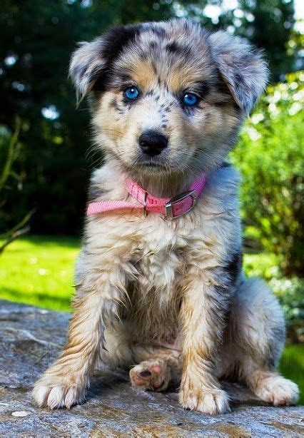 cute puppies ideas  pinterest cute dogs