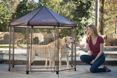 pet gazebo breezy pet gazebos pet gazebo