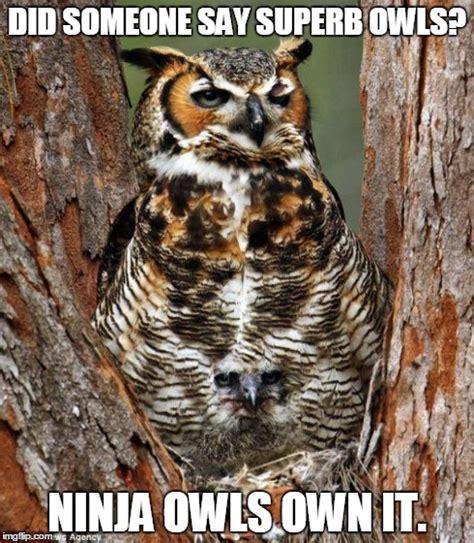 Superb Owl Meme - quaid imgflip