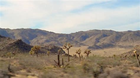 damaged joshua tree national park   hundreds  years  recover  weather channel