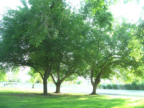 fruit trees las vegas why fall is the best time for planting in las vegas