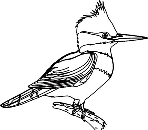 tropical bird animal coloring pages
