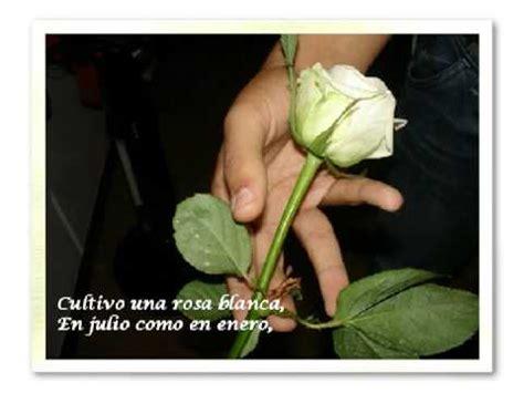 te bancia una rosa