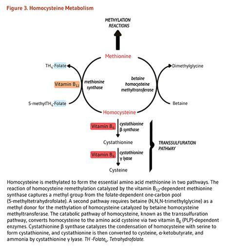 r protein cobalamin folate methyl vitamin b12 and metabolism