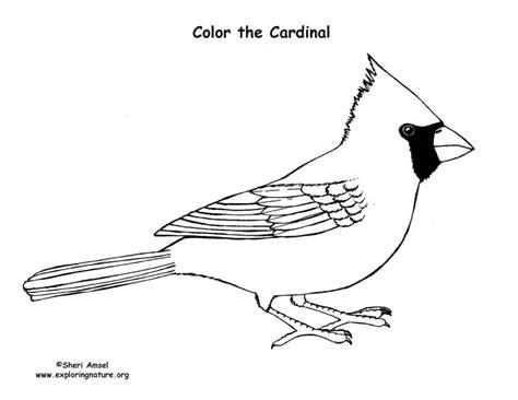 cardinal coloring nature