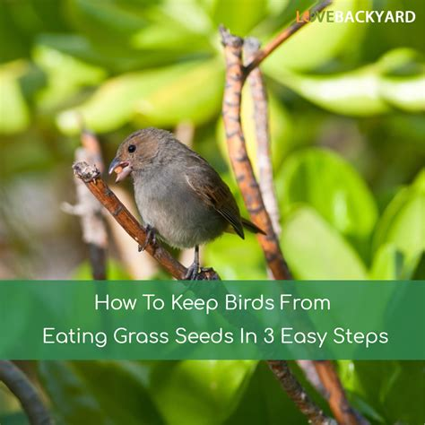 how to keep birds from eating grass seeds in 3 easy steps