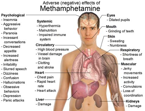 Meth Detox Program by Facts On Methhetamine Withdrawal Rehab Detox