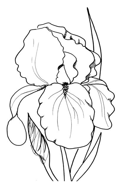 free realistic coloring pages of flowers realistic flower coloring pages az coloring pages