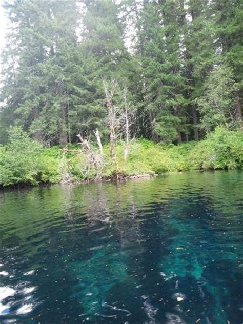 Clear Lake In The Forest Clear Lake Showing Blue Water Lava And Forest Picture