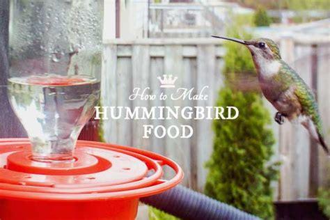 how to make hummingbird food choose a feeder empress