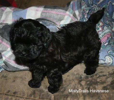 do dogs umbilical cords whelping when things go wrong puppy with umbilical cord attached breeds picture
