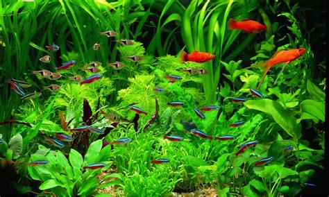 aquarium plants  newbies  tropical fish