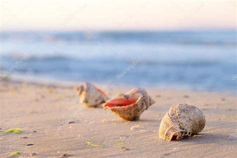 sulla spiaggia bellissime conchiglie sulla spiaggia foto stock