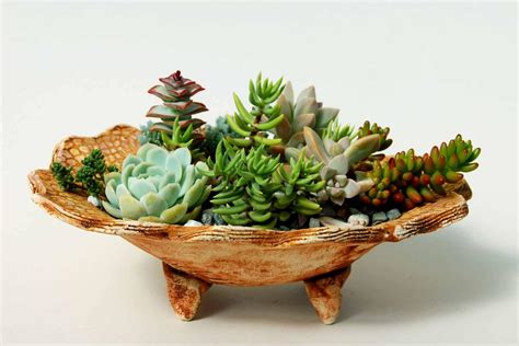 Succulent House by Dish Garden1 Carol Eddy Vessels Sculpture Drawings