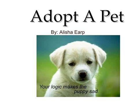 adoptapet dogs adopt a pet