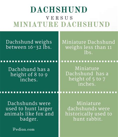 what is the difference between a full and queen bed dachshund vs mini dachshund dogs in our life photo blog