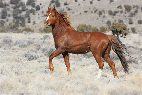 mustang horse desert disneyland deal deemed deadly to wild horses