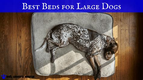 best beds for large dogs the best large beds for the money pet world