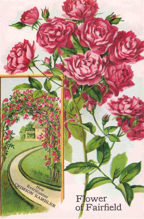 Free Flower Garden Catalogs Antique Images Free Flower Clip Pink Roses From