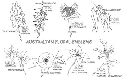 coloring pages of australian flowers great southern land australia 3 4 lb