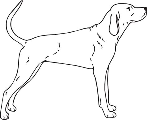 coloring pages hound dog treeing walker hound dog drawing sketch coloring page