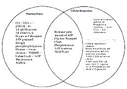 venn diagram cellular respiration and photosynthesis venn diagram photosynthesis and cellular respiration choice image how to guide and refrence