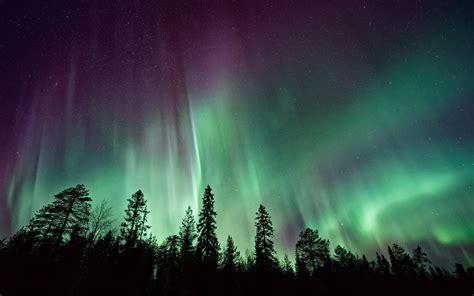wallpaper northern lights forest aurora borealis