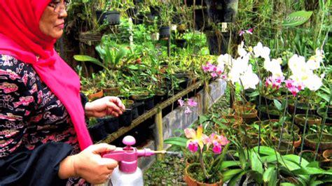 Pupuk Bunga Gaviota cara merawat bunga anggrek jenis beserta penjelasannya