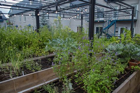 Restaurant Vegetable Garden Urban Seedling Vegetable Garden Restaurant