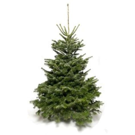 non drop 3 9ft christmas trees uk nordmann fir christmas tree non drop needles