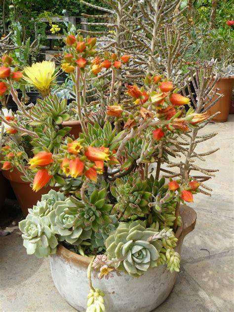 Indoor Succulent Garden Ideas 70 Indoor And Outdoor Succulent Garden Ideas Shelterness