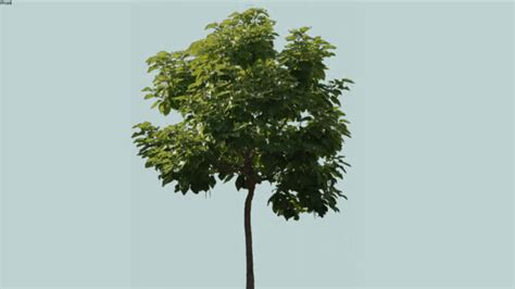 trees png 3d warehouse