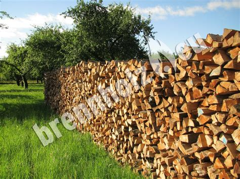 lagerung kaminholz brennholz kaminholz richtig lagern brennholz eu