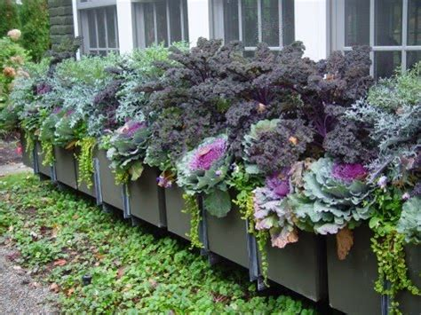 The Impatient Gardener: How to plant a rockin' window box