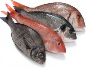 healthy recipe update eat fish every week can reduce loss of visibility due to a decrease of