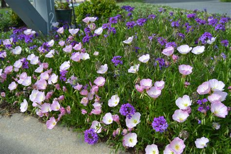Blooms For And by Perennials Flowers That Bloom All Summer Flowers Ideas