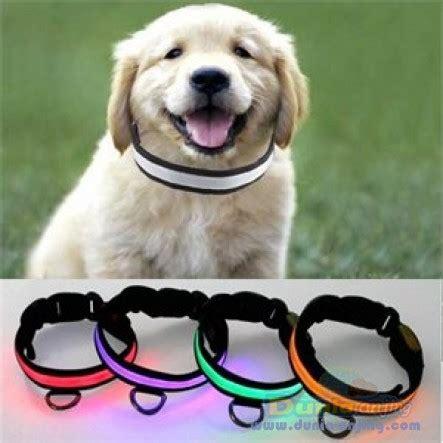 Kalung Renda Untuk Kucing Anjing dunia anjing produk anjing led collar kalung bisa nyala dalam gelap