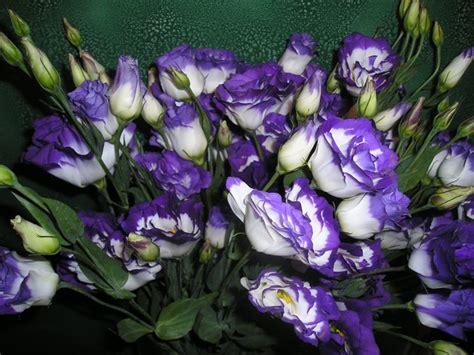 significato fiori lisianthus significato significato fiori significato