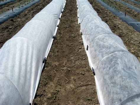 vegetable garden row covers row covers for protection and earliness in vegetable production msu extension