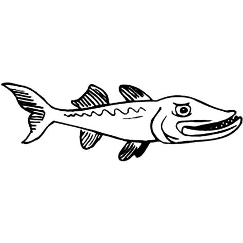 barracuda fish coloring page free coloring pages of barracuda fish