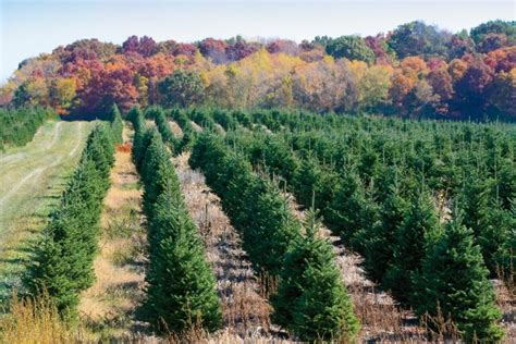 28 best christmas tree farms in wisconsin nicole