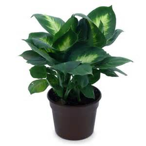 Potted Plants by Indoor Potted Plant Images