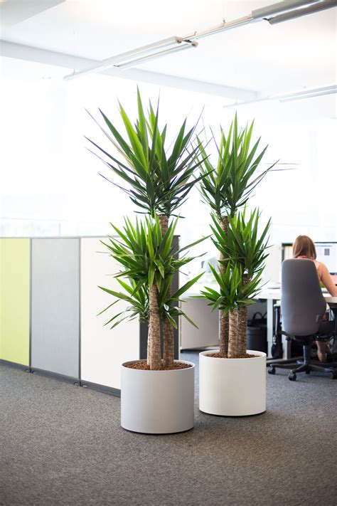 office plant images of live office plant displays office landscapes
