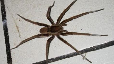 kill spiders in house man who used blowtorch to kill spider burns down home one news page uk