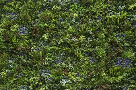 Plant Cloddig 17 best images about green walls on gardens