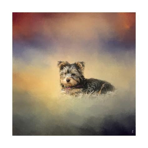 johnson yorkies yorkie loving the leaves giclee print by jai johnson at allposters