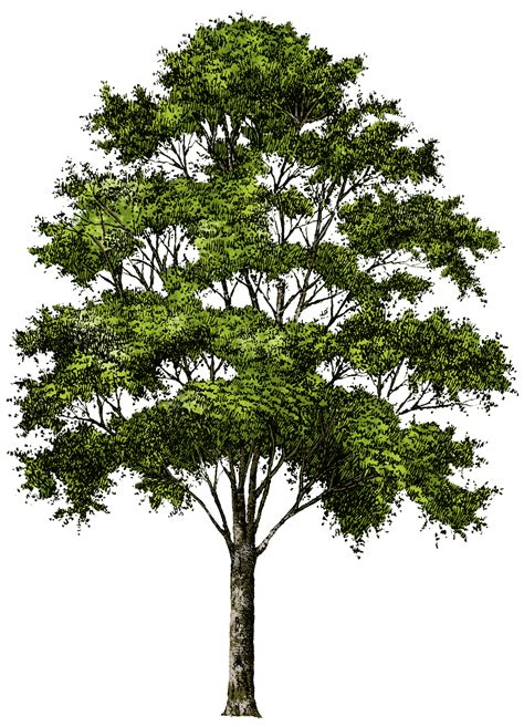 section of tree tree png images pictures download free