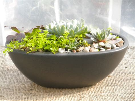 planters for succulents succulent planter michler s florist greenhouses