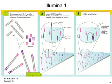 illumina sequencing method nanohub org resources illinois ece 416 protein