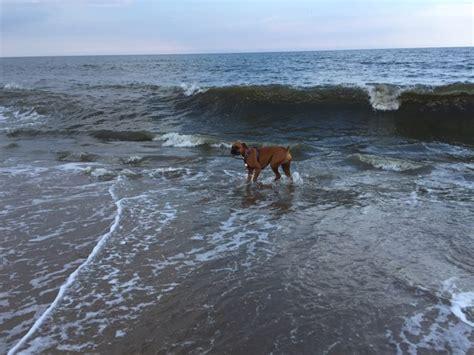 friendly beaches delaware friendly beaches in dewey de us